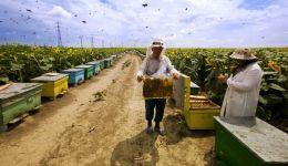 كيلو العسل من أرضنا بألف دولار ...!!؟
