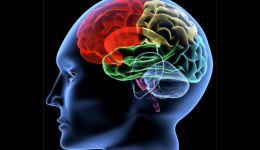 العلماء يكتشفون 'شبكة صرف صحي' داخل أدمغتنا!