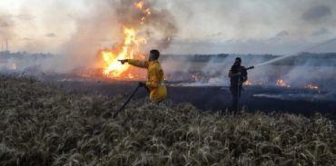 الطائرات الورقية الفلسطينية تشعل عشرات الحرائق