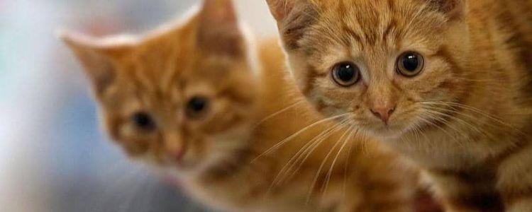 ظاهرة اختفاء القطط يوم العيد !! ...حميد طولست