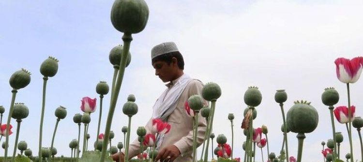 لا تثقوا بالولايات المتحدة : (18) حرب الولايات المتحدة على المخدّرات وسيلة لنشرها ولتدمير الشعوب... إعداد: حسين سرمك حسن