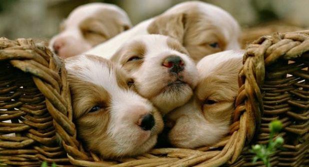 هل الحيوانات تحلم خلال نومها