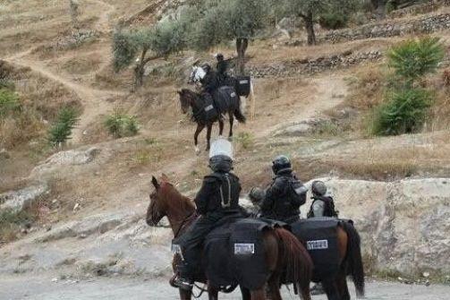 جنود خيالة يصادرون المواشي في الأغوار