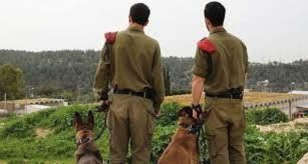 بتسيلم: 27 فلسطينيا في الضفة و 8 في غزة سقطوا برصاص الجيش الاسرائيلي في 2013
