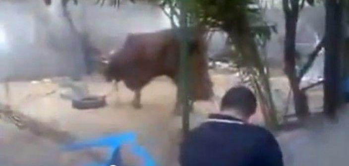 بعد فيديو إطلاق النار: استراليا تحظر تصدير الماشية لغزة لسوء معاملتها