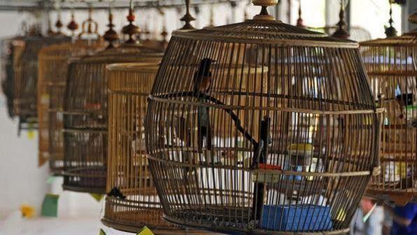 طيور ملك نيبال السابق تتضور جوعا