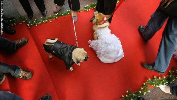 امرأة بريطانية تنتقم من طليقها بالزواج من كلبتها