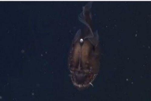 بالفيديو...شيطان البحر الأسود يظهر للمرة الأولى