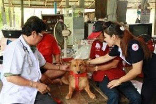 كلب ينقذ حياة طفلة بالعثور عليها في.. مكب للنفايات