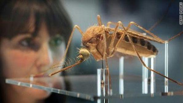 علاج مرض الملاريا القاتل.. بصابونة