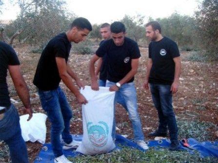 طلبة الجامعة العربية الأمريكية  يشاركون أهالي بلدة عرابة قطف الزيتون