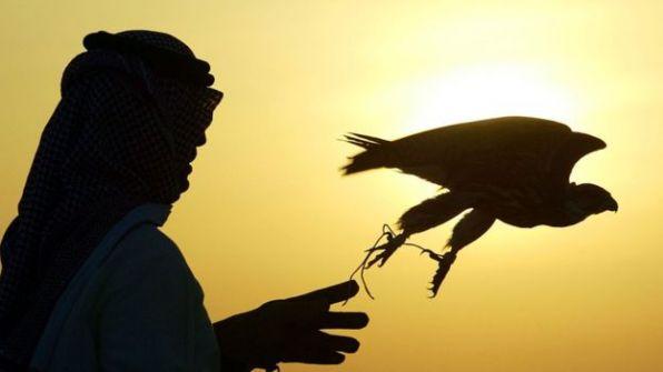 'أثرياء العرب' أحد أسباب زيادة سرقة الطيور الجارحة في الغرب