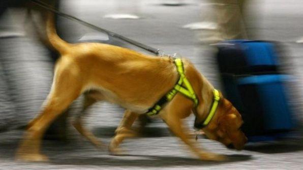 الكلاب البوليسية: واشنطن توقف إرسالها إلى الأردن ومصر