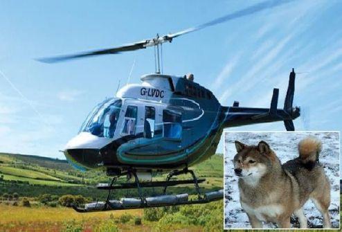 بريطانية تستأجر طائرة هليكوبتر لتبحث عن كلبتها