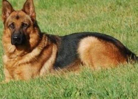 كلب مطلوب للشرطة الاسرائيلية