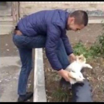 فيديو:رجل يستخدم 'قطة' كفرشاة لتلميع حذائه