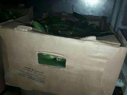 جنود احتياط يحتجون: خضار من غزة في مطبخ الجيش الإسرائيلي