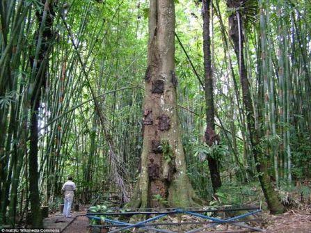 قرية إندونيسية تُحَوّل جذوع الأشجار إلى مقابر للرضع