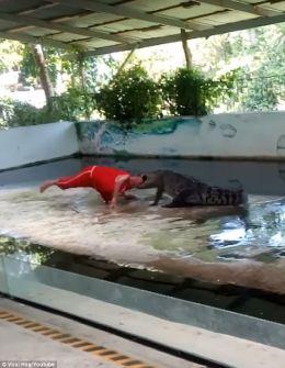 مشهد التهام تمساح غادر لرأس حارسه حديث التواصل.. بالفيديو المروع والصور