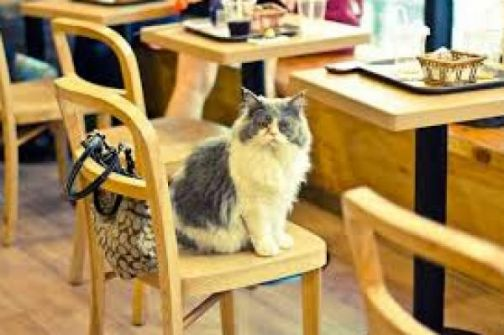 دبي تفتتح مقهى للقطط